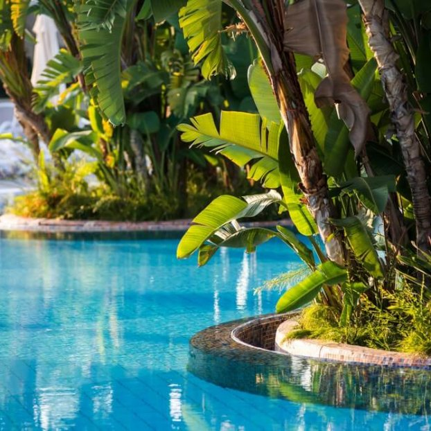 Natural Pools Swimming pool landscaping
